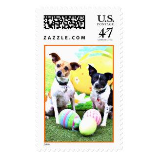 Pascua - fox terrier - Sadie y Baboo Sello