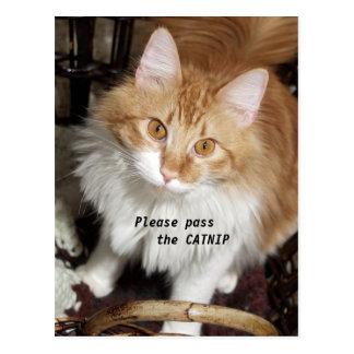 Pase por favor la postal del gato del Catnip
