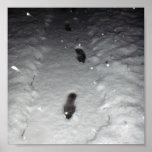 Paseo en la nieve impresiones