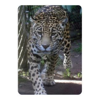 Paseos de Jaguar atento hacia cámara Invitación 12,7 X 17,8 Cm