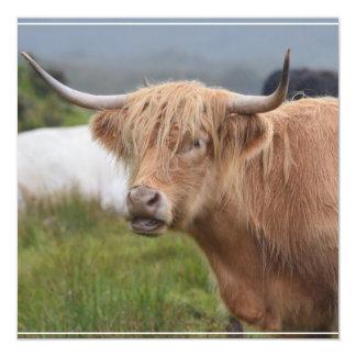 Pasto de la vaca de la montaña comunicado personal