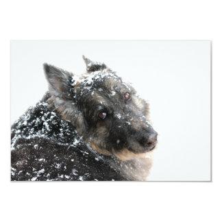 Pastor belga en nieve invitación 8,9 x 12,7 cm