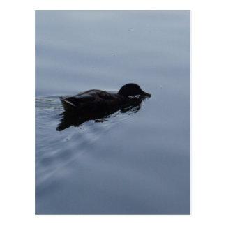 Pato de la natación en el lago, azul de la fauna postal