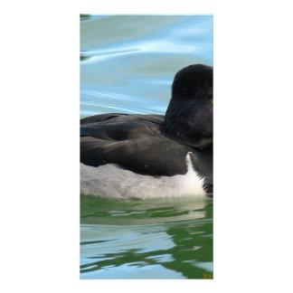 Pato de salto Anillo-necked de cabeza negra del Tarjeta Con Foto Personalizada
