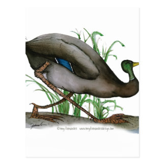 pato del pato silvestre - pájaro salvaje, postal