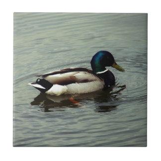 Pato en el agua azulejo cuadrado pequeño