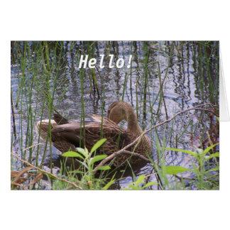 Pato en el agua tarjeta pequeña