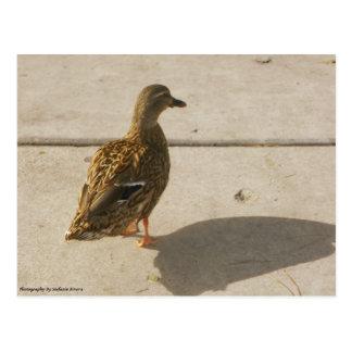 Pato en el movimiento postal