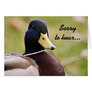 Pato triste oír la tarjeta