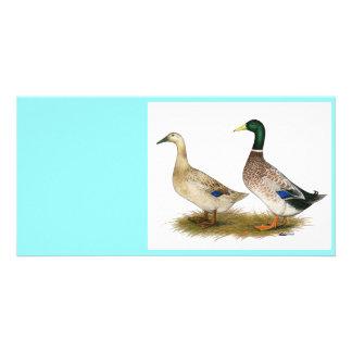 Patos:  Harlequin de plata Galés Tarjeta Fotográfica Personalizada