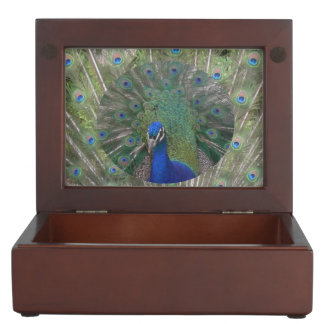 Pavo real con la caja del recuerdo de las plumas