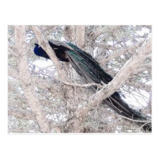 Pavo real del lápiz del color en árbol postal
