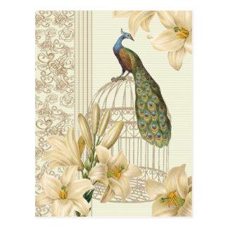 Pavo real sofisticado del birdcage del lirio del postal
