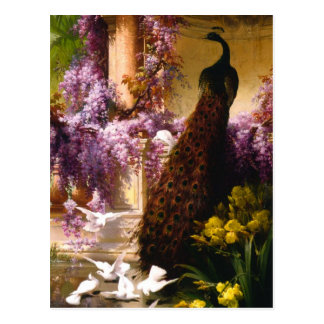 Pavo real y palomas en un jardín tarjeta postal