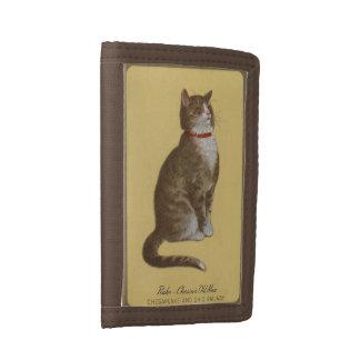 Peake, gato de tabby del tomcat del viejo hombre