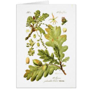 Pedunculata del quercus (roble inglés) tarjeta de felicitación