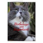 Pega la tarjeta de cumpleaños del gato. - para cua