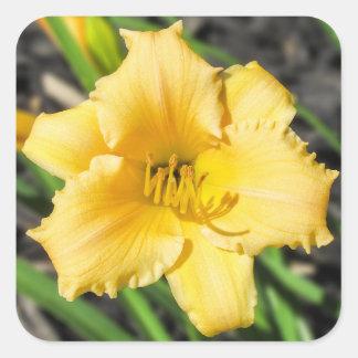 Pegatina amarillo de la flor del lirio