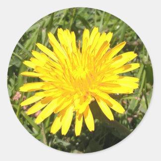 Pegatina amarillo de la foto de la naturaleza de