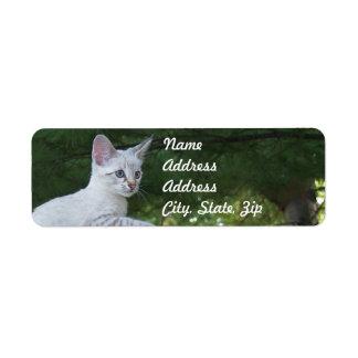 Pegatina blanco del remite del gato de la sabana etiqueta de remitente