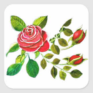 Pegatina Cuadrada Acento del rosa rojo y de los brotes 3 pulgadas