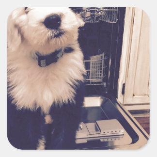 Pegatina Cuadrada Amor del perro pastor