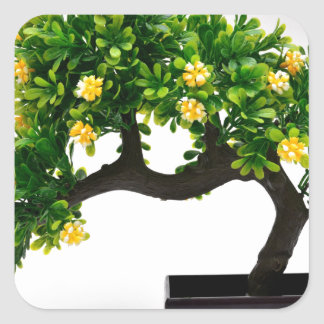Pegatina Cuadrada Árbol de los bonsais