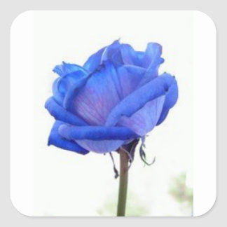 Pegatina Cuadrada azul-rosa