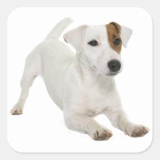 Pegatina Cuadrada Blanco Brown del perro de perrito de Jack Russell