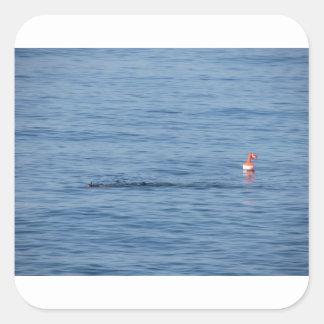 Pegatina Cuadrada Buceador del mar en nadada del juego del equipo de