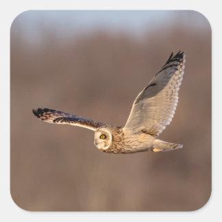 Pegatina Cuadrada búho Cortocircuito-espigado en vuelo