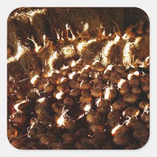 Pegatina Cuadrada Cebollas a montones