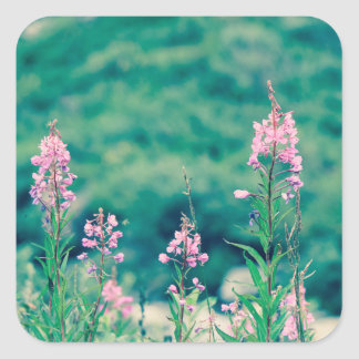 Pegatina Cuadrada crossprocess del fireweed