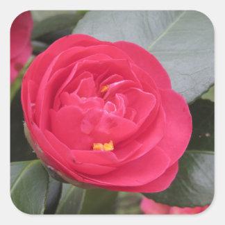 Pegatina Cuadrada Cultivar japonés antiguo del japonica rojo de la