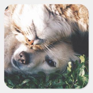 Pegatina Cuadrada El perro ama el gatito