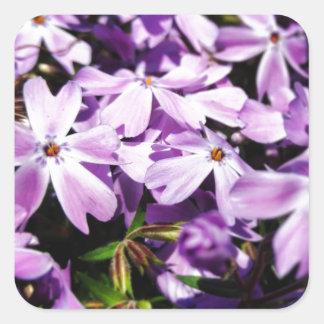 Pegatina Cuadrada El remiendo púrpura de la flor