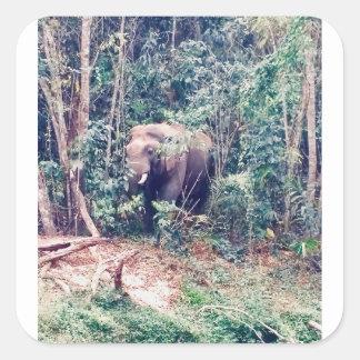 Pegatina Cuadrada Elefante en Tailandia