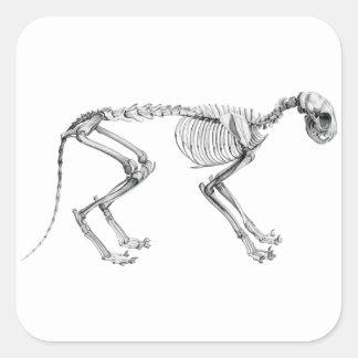 Pegatina Cuadrada Esqueleto del gato egipcio