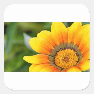 Pegatina Cuadrada Floración amarilla