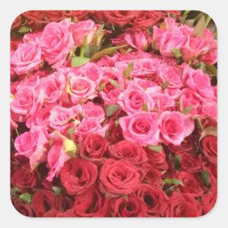 Pegatina Cuadrada Flores en los rosas de Filipinas, rosados y rojos