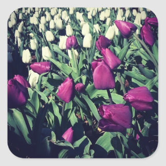 Pegatina Cuadrada Flores púrpuras