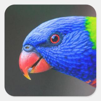 Pegatina Cuadrada Fresco-Arco iris-Lorikeet-silkenphotography