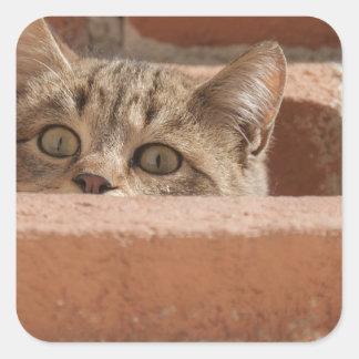 Pegatina Cuadrada Gato montés joven curioso de la atención de los