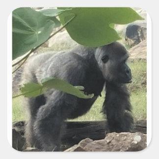 Pegatina Cuadrada Gorila del Silverback