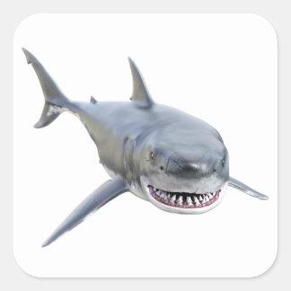 Pegatina Cuadrada gran tiburón blanco que nada al frente