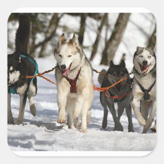 Pegatina Cuadrada grupo de trabajo del husky siberiano