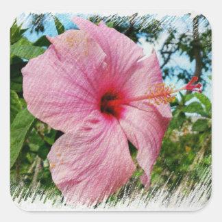Pegatina Cuadrada Hibisco rosado