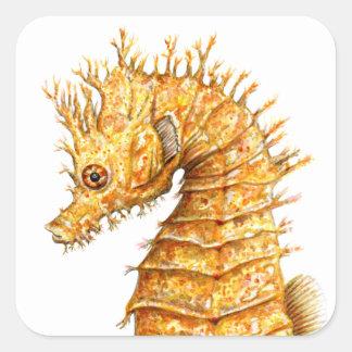 Pegatina Cuadrada Hipocampo del hipocampo del caballo de mar
