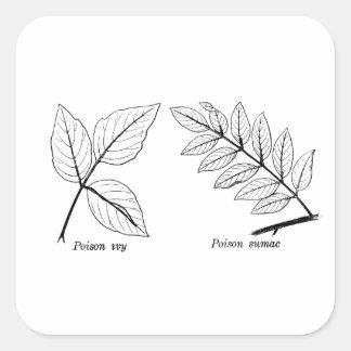 Pegatina Cuadrada Hojas botánicas del vintage