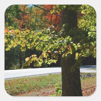 Pegatina Cuadrada Hojas de otoño en Maine